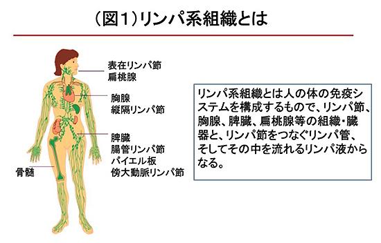 図1 リンパ系組織とは