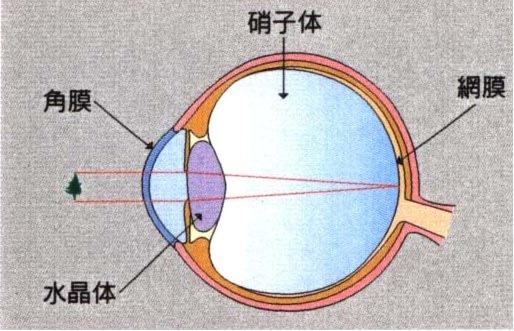 図2.眼球の構造