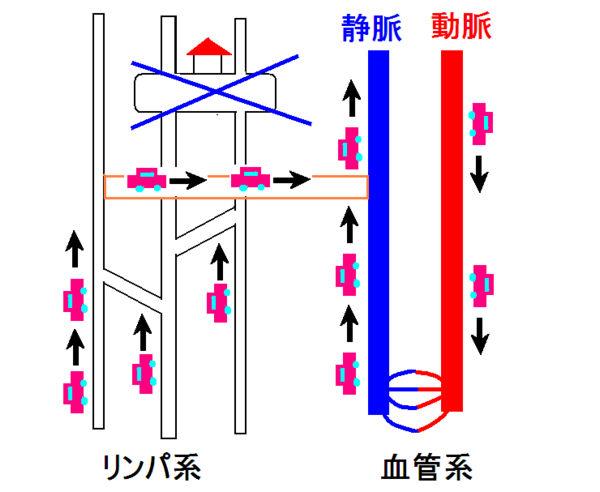 図4.リンパ管-静脈吻合後