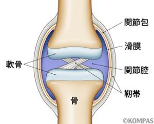 図1 関節の構造
