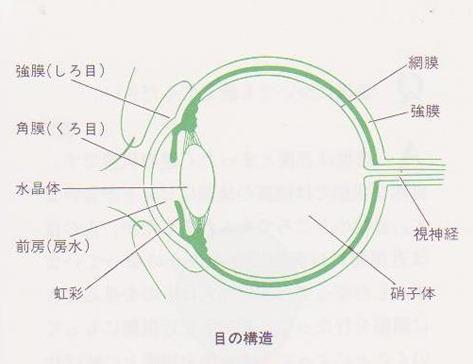 図1.目の断面図