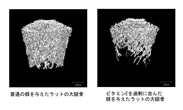 図3 ラットにビタミンEを投与すると骨が減少する