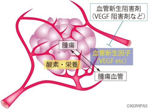 図1 がん血管と抗腫瘍血管新生療法