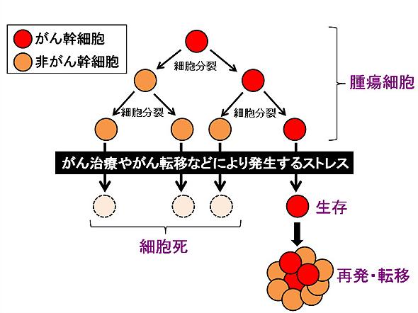 図1.がん幹細胞と再発・転移の関わり