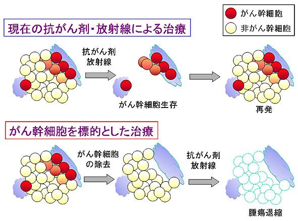 図2.がん幹細胞モデルに基づく癌治療の変化