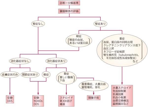 IgA血管炎(IgA vasculitis: IgAV)、ヘノッホ-シェーンライン紫斑病(Henoch-Schölein purpura: HSP)膠原病と免疫の病気