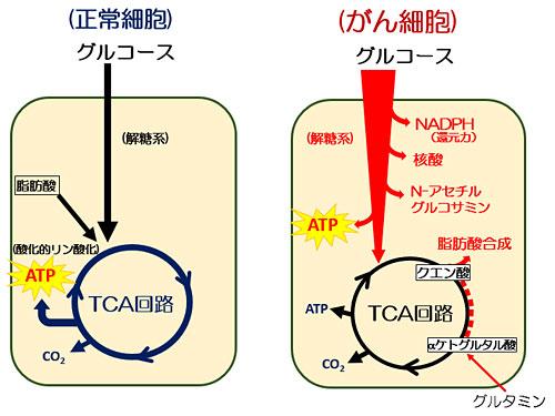 図1 がん細胞の代謝特性