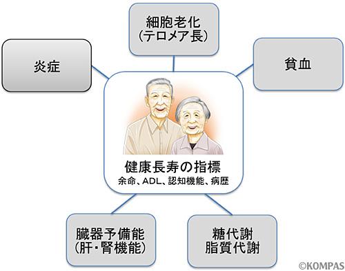 図2.老化関連バイオマーカーと健康長寿の関連の検証
