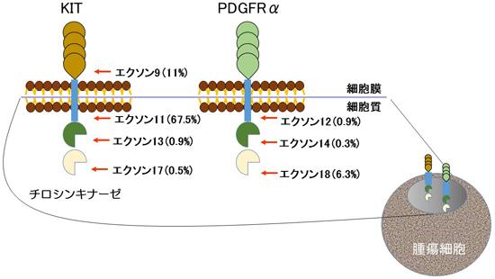 図3.蛋白変異部位と頻度