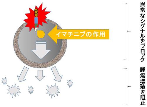図7.イマチニブの作用