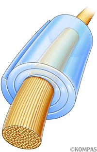 図1.神経軸索を包むミエリン