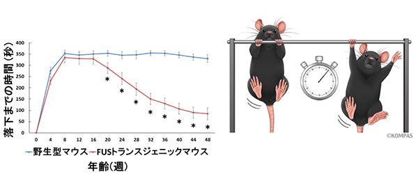 図2.マウスに実施した懸垂試験のグラフ