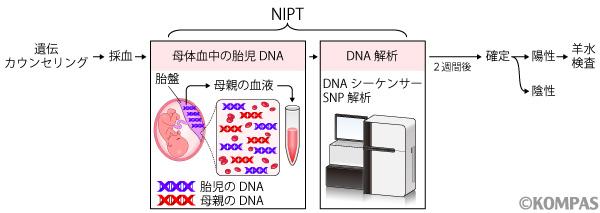 図1.NIPTの流れ