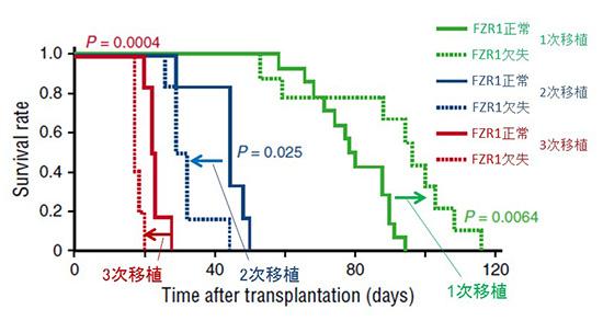 図3.B-ALLマウスモデルでのFZR1の有無による生存曲線の比較
