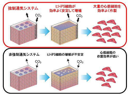 図2. 強制通気2次元多層培養プレートを用いた大量心筋作製法(参考文献1のGraphical Abstractより一部改変)