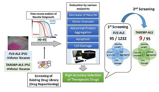 図2. 既存薬ライブラリーを用いたALS治療候補薬の同定