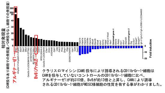 図2. クラリスロマイシン投与によるCD11b+Gr-1+細胞の遺伝子発現の変動