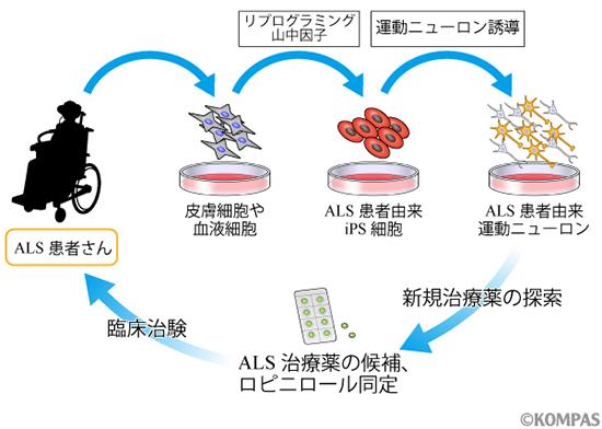 図2.患者さん由来iPS細胞を用いた創薬の展開