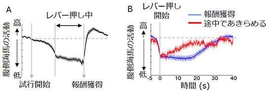 図2. 意欲行動に伴う腹側海馬の活動変化
