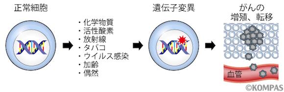 図2.遺伝子変異とがんの関わり