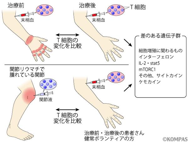 図3. T細胞の発現遺伝子の比較