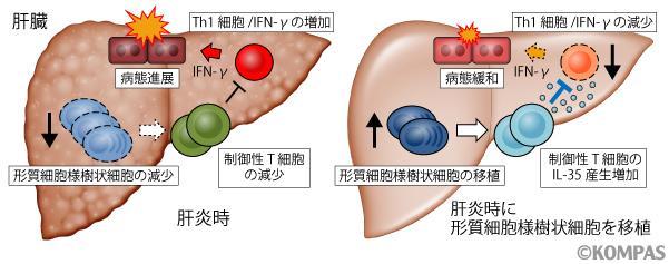 図4. 本研究の概要