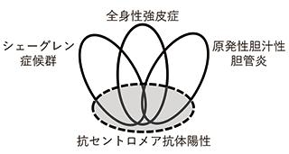 図2. 抗セントロメア抗体の新しい位置付け